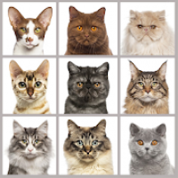 Cat breed quiz: guess the cats