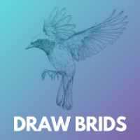 How to draw birds step by step easily