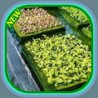 how to grow vegetables by hydroponics