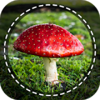 Mushroom identifier App by Photo, Camera 2020