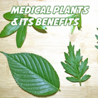 Top Medicinal Plants And Its Uses